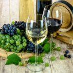 Cosa sono i tannini del vino?