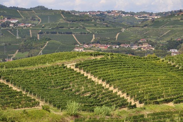 Lista vini Piemontesi
