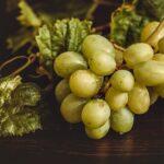 Regione vinicola del Rodano settentrionale: la terra del Syrah francese
