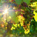 Guida ai vini di Montepulciano