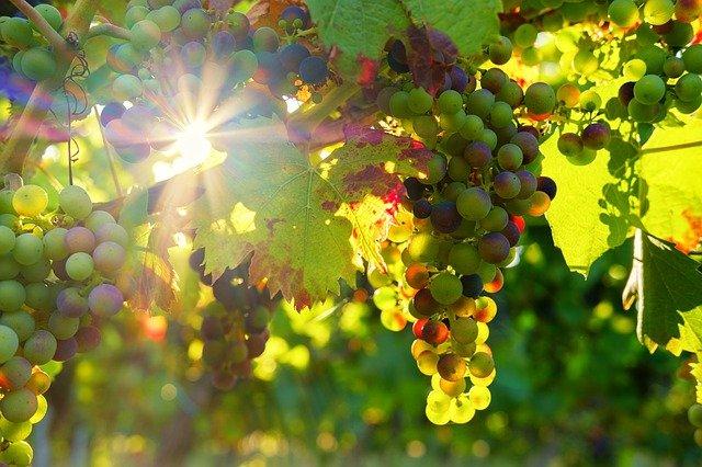 vini di Montepulciano