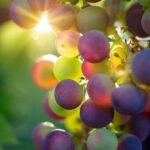 Guida al vino Tempranillo